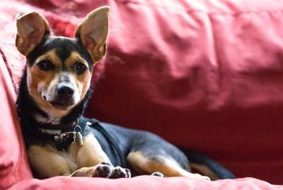 Er was eens… – Een verhaaltje voor een ontspannen hond.
