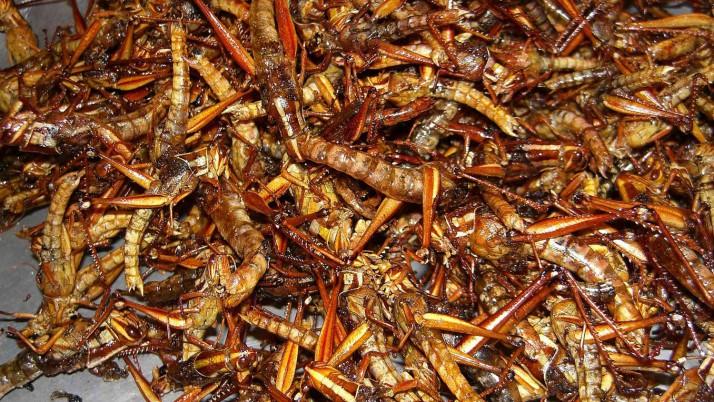 Vliegen, larven en mieren – De toekomst van duurzame hondenvoeding?