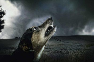 Het verminderen van angst in honden